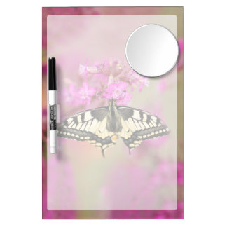 Closeup dovetail butterfly on lilac flower dry erase board with mirror