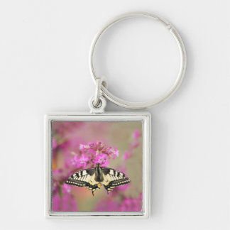 Closeup dovetail butterfly on lilac flower keychain