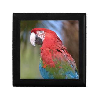 Closeup green-winged macaw gift box