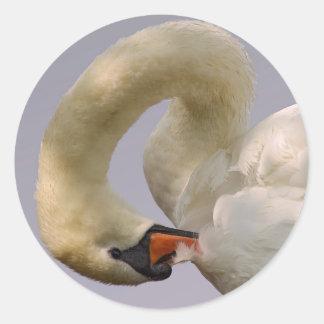 Closeup mute swan classic round sticker