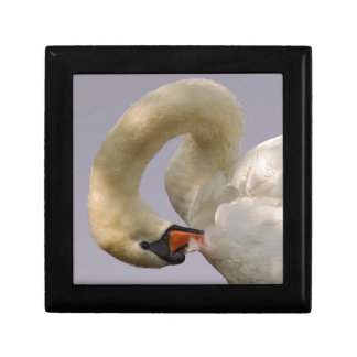 Closeup mute swan gift box
