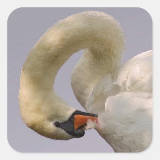 Closeup mute swan square sticker