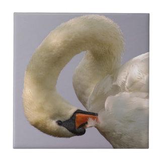 Closeup mute swan tile