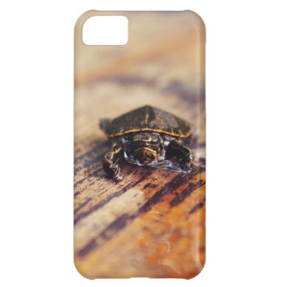 Closeup of a Baby Painted Turtle Case For iPhone 5C