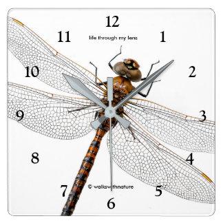Closeup of a Canada Darner Dragonfly Wall Clock