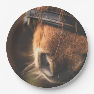 Closeup of a Cute Brown Horse Nose 9 Inch Paper Plate