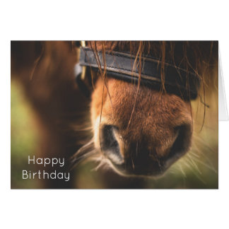 Closeup of a Cute Brown Horse Nose Birthday Card