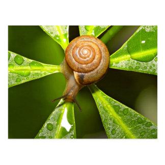 Closeup of a Snail on a Plant Postcard
