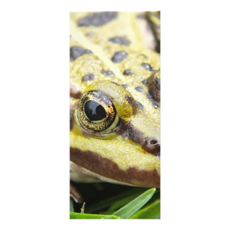 closeup of a tree frog, toad custom announcements