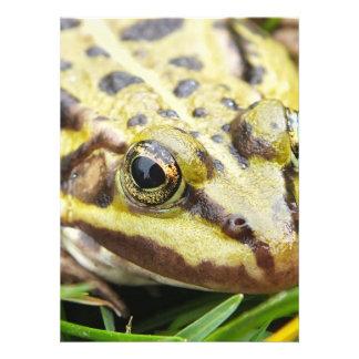 closeup of a tree frog, toad custom invitation