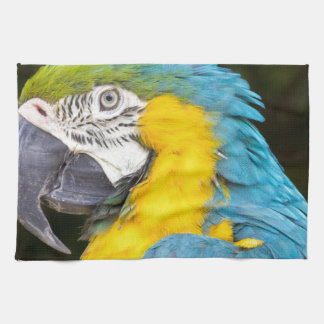 Closeup of blue-and-yellow macaw kitchen towel