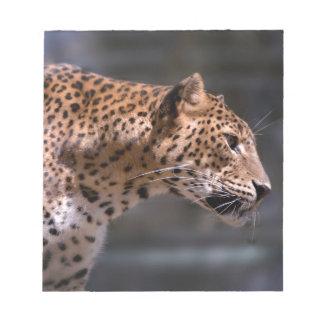 Closeup of Leopard Notepads
