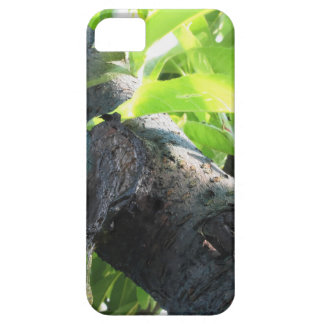 Closeup of peach tree excretion of gummy resin iPhone 5 case