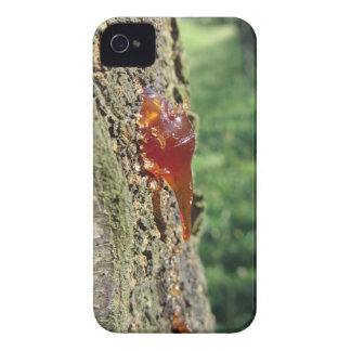Closeup of pear tree excretion of gummy resin Case-Mate iPhone 4 case