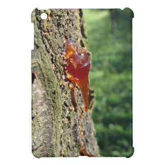 Closeup of pear tree excretion of gummy resin cover for the iPad mini