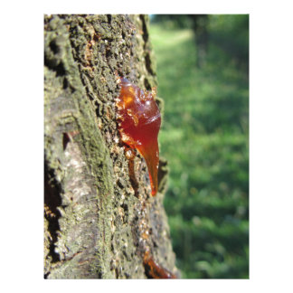 Closeup of pear tree excretion of gummy resin letterhead