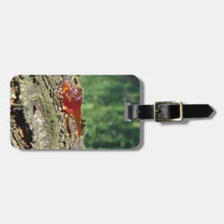Closeup of pear tree excretion of gummy resin luggage tag