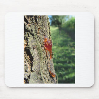 Closeup of pear tree excretion of gummy resin mouse pad