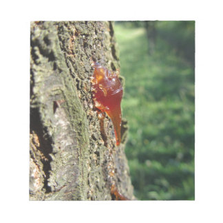 Closeup of pear tree excretion of gummy resin notepad