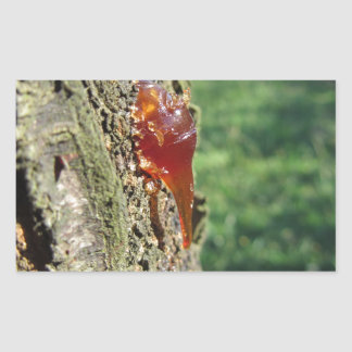 Closeup of pear tree excretion of gummy resin sticker