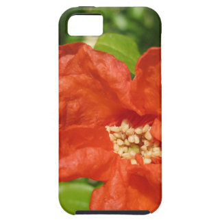 Closeup of red pomegranate flower iPhone 5 cover