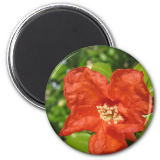 Closeup of red pomegranate flower magnet