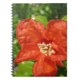 Closeup of red pomegranate flower notebooks