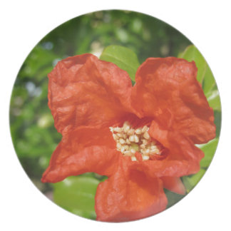 Closeup of red pomegranate flower plate
