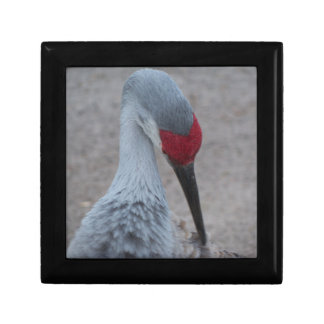Closeup of the face of a Sand Hill Crane Gift Box