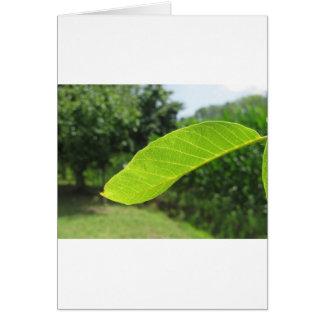 Closeup of walnut leaf lit by sunlight card