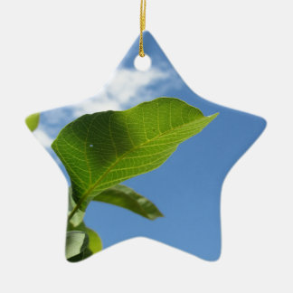 Closeup of walnut leaf lit by sunlight ceramic ornament