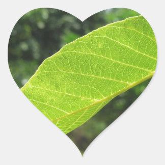 Closeup of walnut leaf lit by sunlight heart sticker