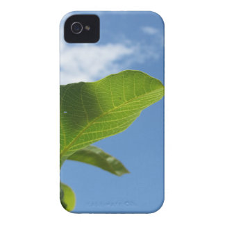 Closeup of walnut leaf lit by sunlight iPhone 4 covers