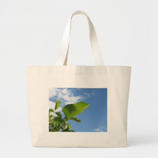 Closeup of walnut leaf lit by sunlight large tote bag