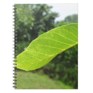 Closeup of walnut leaf lit by sunlight notebook