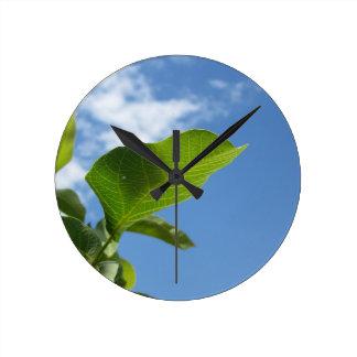 Closeup of walnut leaf lit by sunlight round clock