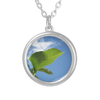 Closeup of walnut leaf lit by sunlight silver plated necklace