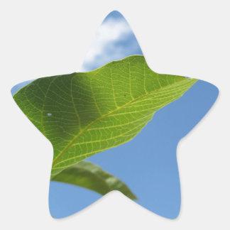 Closeup of walnut leaf lit by sunlight star sticker