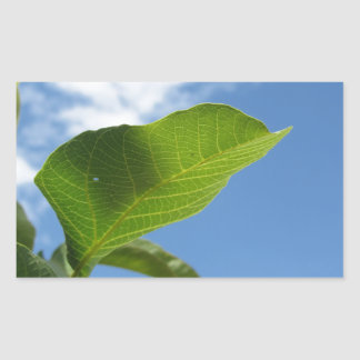 Closeup of walnut leaf lit by sunlight sticker