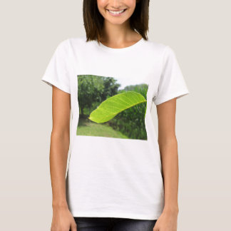 Closeup of walnut leaf lit by sunlight T-Shirt