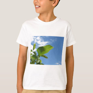 Closeup of walnut leaf lit by sunlight T-Shirt