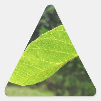 Closeup of walnut leaf lit by sunlight triangle sticker