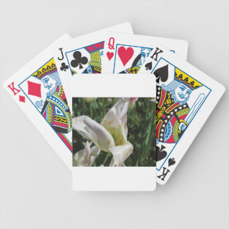 Closeup of white iris flower with droplets bicycle playing cards