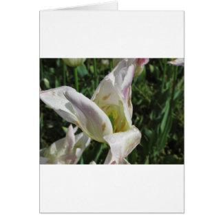 Closeup of white iris flower with droplets card