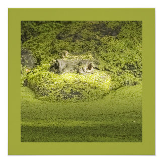 Closeup Photograph of a Gator in Duckweed Card