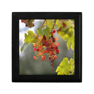 Closeup red grapes among leaves gift box