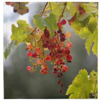 Closeup red grapes among leaves napkin
