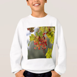 Closeup red grapes among leaves sweatshirt