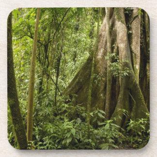 Cloud forest, Bosque de Paz, Costa Rica Coasters