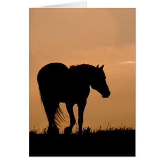 Cloud Walks at Sunset Wild Horse Greeting Card